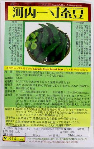 野口のタネ|河内一寸蚕豆|日本一大粒の美味ソラマメ