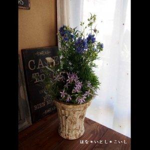 【寄せ植え325 デルフィニウムとイソトマの寄せ植え】<br>母の日の贈りものに