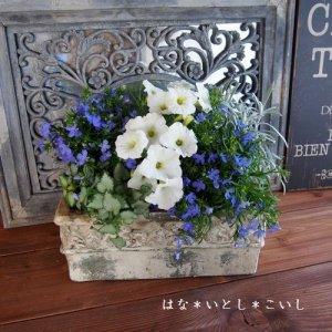 【寄せ植え326 ロベリアとペチュニアの寄せ植え】<br>母の日の贈りものに