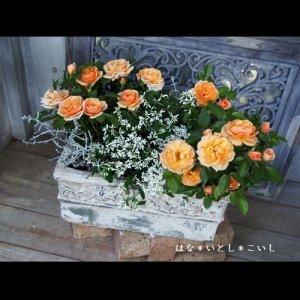 【寄せ植え330 ミニバラの寄せ植え】<br>母の日の贈りものに