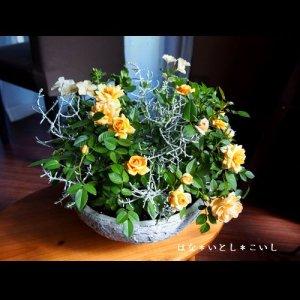 【寄せ植え332 ミニバラ モカフェローズの寄せ植え】