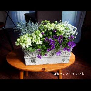 【寄せ植え334 バーベナとカリブラコアの寄せ植え】母の日の贈りものに