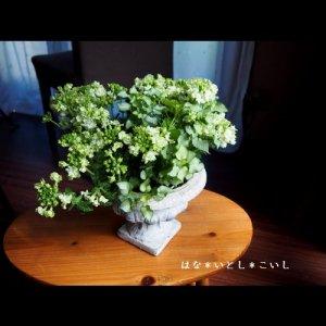 【寄せ植え335 バーベナとラミウムの寄せ植え】母の日の贈りものに