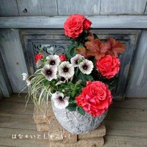 【寄せ植え398 母の日の贈りものにおすすめ! オレンジ色のミニバラの寄せ植え】<br>