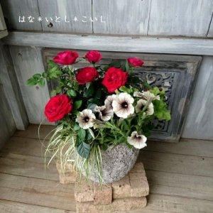 【寄せ植え399 母の日の贈りものにおすすめ! レッドのミニバラの寄せ植え】<br>