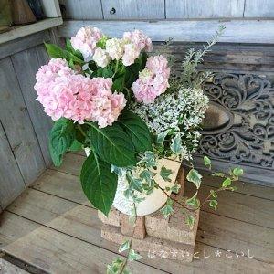 【寄せ植え484 山アジサイ 伊予獅子手まりの寄せ植え】<br>母の日の贈りものに♪