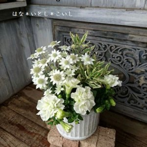 【寄せ植え492 八重咲きペチュニアとフランネルフラワーの寄せ植え】<br>母の日の贈りものに♪