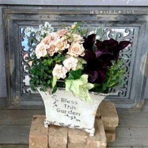 【寄せ植え549 ミニバラモカの寄せ植え】<br>  母の日の贈りものにいかがでしょう。