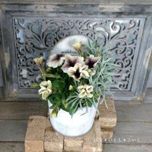 【寄せ植え553 ペチュニアカプチーノの寄せ植え】<br>  母の日の贈りものにいかがでしょう。