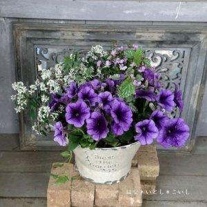 【寄せ植え554 ペチュニアの寄せ植え】<br>  母の日の贈りものにいかがでしょう。