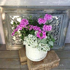 【寄せ植え563 ピンクのバーベナの小さな寄せ植え】<br>  母の日の贈りものにいかがでしょう。