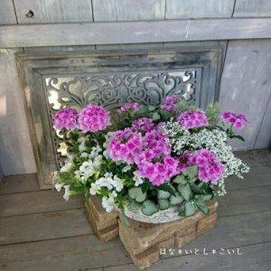 【寄せ植え571 ピンクのバーベナの寄せ植え】<br>  母の日の贈りものにいかがでしょう。