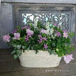 【寄せ植え574 八重咲きペチュニアの寄せ植え】<br>