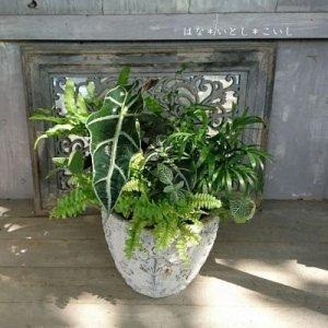 【寄せ植え577 観葉植物の寄せ植えC】<br>お手入れラクラク