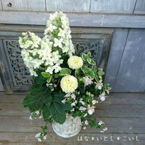 【寄せ植え594  母の日の贈り物に♪カシワバアジサイの寄せ植え】