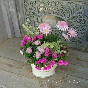 【寄せ植え599  母の日の贈り物に♪マーガレットの小さな寄せ植え】