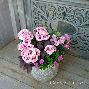 【寄せ植え597  母の日の贈り物に♪カーネーションの寄せ植えA】