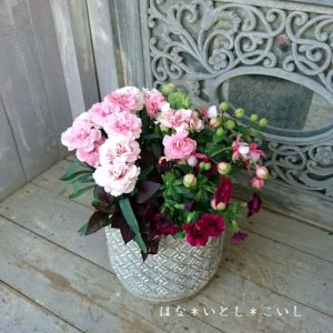 【寄せ植え598  母の日の贈り物に♪カーネーションの寄せ植えB】