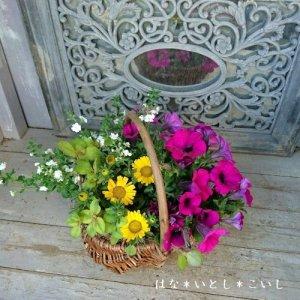 【寄せ植え603  母の日の贈り物に♪ペチュニアのバスケット寄せB】