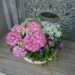【寄せ植え606  母の日の贈り物に♪ハイドランジアの寄せ植え】
