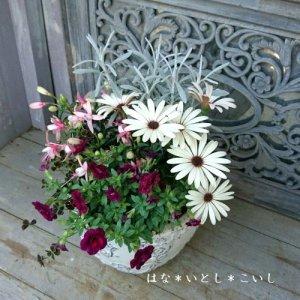 【寄せ植え608  母の日の贈り物に♪オステオスペルマムの寄せ植え】