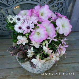 【寄せ植え609  母の日の贈り物に♪ ピンクのペチュニアの寄せ植え】