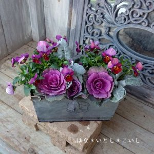 【寄せ植え303  ハボタンの寄せ植え】<br>落ち着いた雰囲気で♪春まで長く楽しめます。