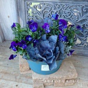 【寄せ植え309  チタニウムシルバーの寄せ植え】<br>深いブルーの寄せ植え☆春まで長く楽しめます♪