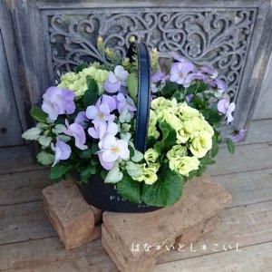 【寄せ植え318 マスカットのジュレの寄せ植え】<br>愛らしさいっぱい☆春まで長く楽しめます♪