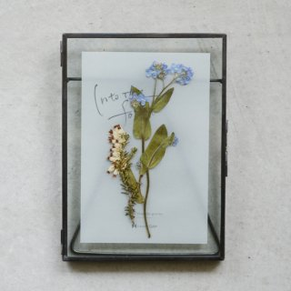 Plants Art - Forget-me-not A