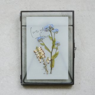 Plants Art - Forget-me-not B