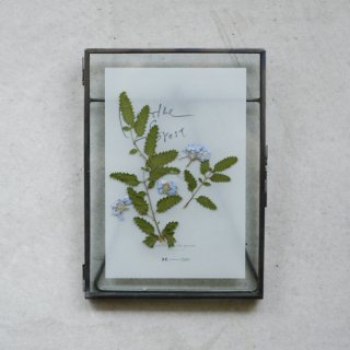 Plants Art - Burnet