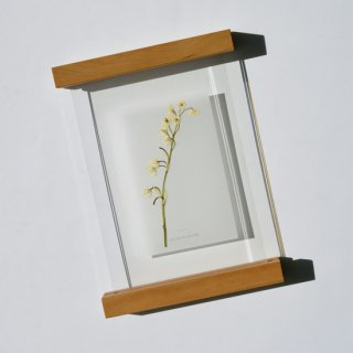 botanical frame__ Lily of the valley