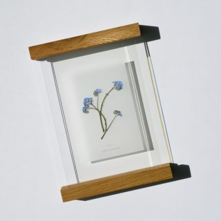 botanical frame__ forget-me-not
