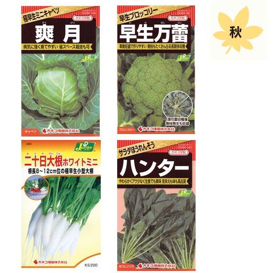 秋に植えたい野菜栽培セット