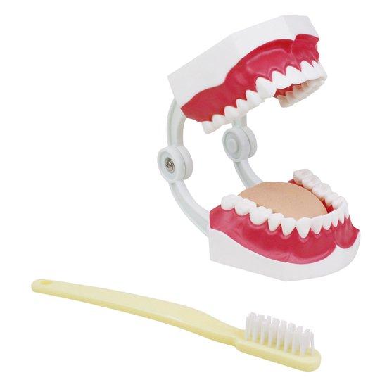 大型歯みがき指導模型 ※欠品中 21/4月下旬入荷予定