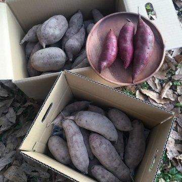 さつま芋(ベニアズマ)5キロ箱