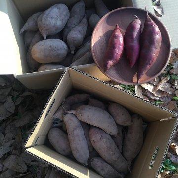 さつま芋(ベニアズマ)10キロ箱