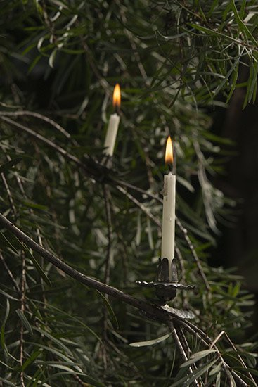 tree candle stand / C.D  155458606