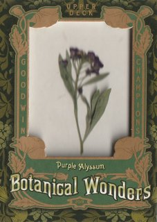 2019 UPPER DECK GOODWIN CHAMPIONS Botanical Wonders Purple Alyssum / MINT新宿店 とみち様[7月]
