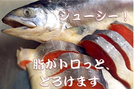 北海道産時鮭(釣鮭・10切)
