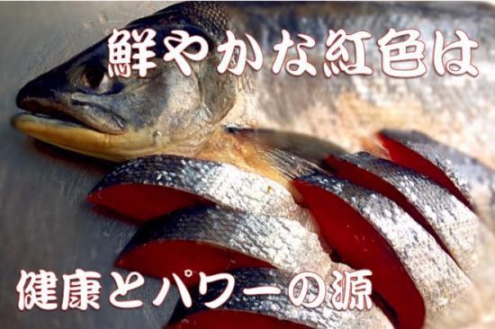 北海道加工高級紅鮭(10切)