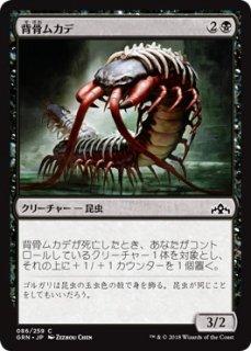 背骨ムカデ/Spinal Centipede