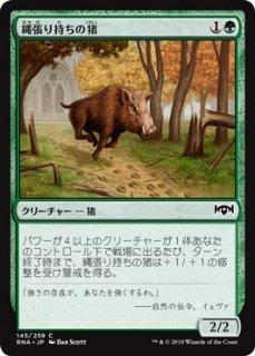 縄張り持ちの猪/Territorial Boar