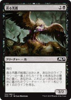貪る禿鷹/Gorging Vulture