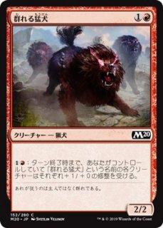 群れる猛犬/Pack Mastiff