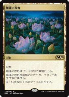 睡蓮の原野/Lotus Field