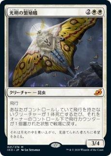 光明の繁殖蛾/Luminous Broodmoth