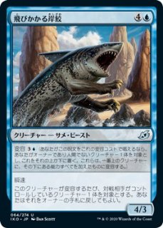 飛びかかる岸鮫/Pouncing Shoreshark