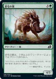 逆毛の猪/Bristling Boar